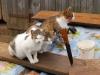 kissat puhdistautumassa