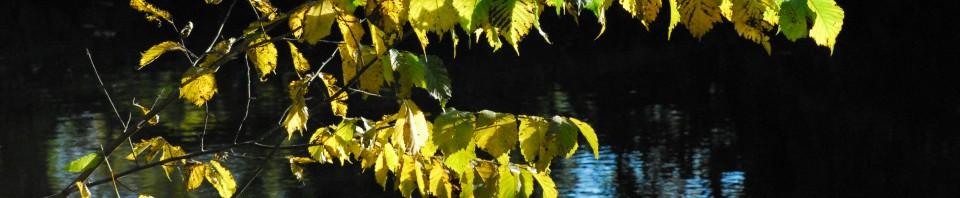 Gulnande löv över kanalens blåa vatten